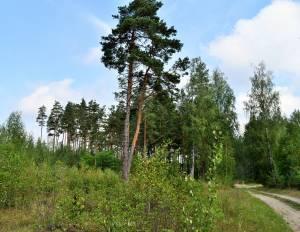 Kociņi, Ādaži 8,4 ha